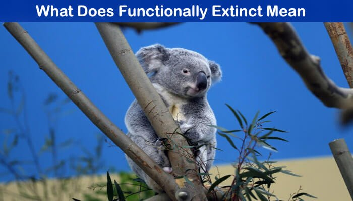 Types of Stock Trades